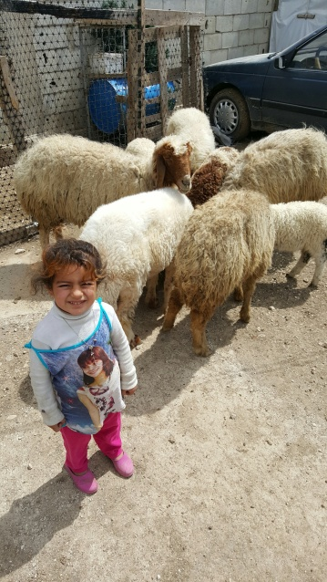 Amina's sheepherder in Lebanon