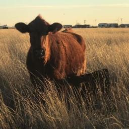 Let's Talk Livestock & Greenhouse Gas Emissions